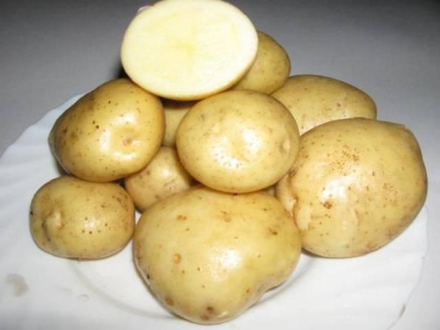 картофель колобок