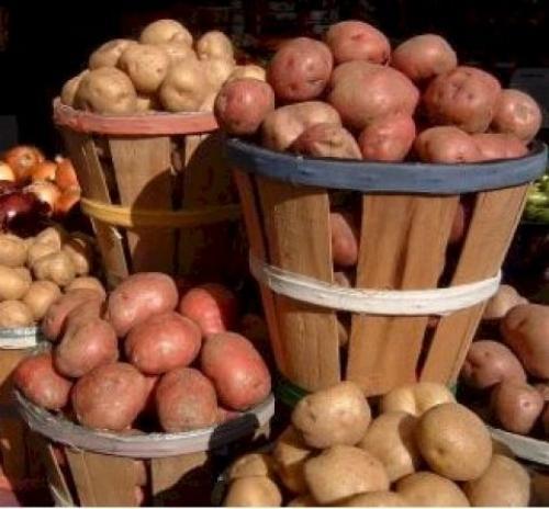 картошка в ведре