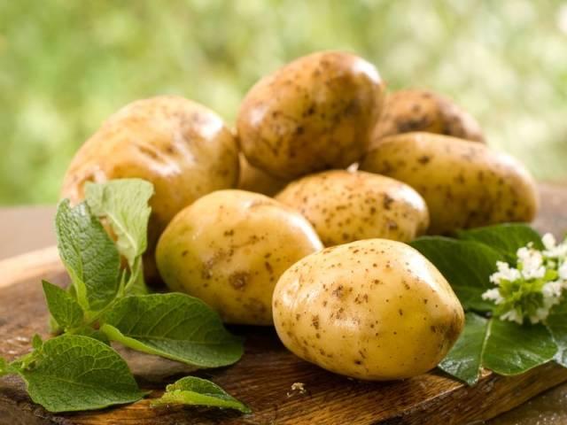 употребление картошки