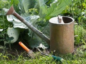 Как и чем лучше подкормить капусту в открытом грунте, удобрения для роста