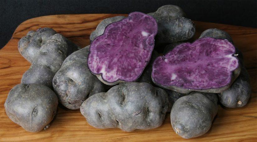 картофель Вителот