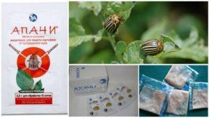 Инструкция по применению средства «Апачи» от колорадских жуков, как разводить