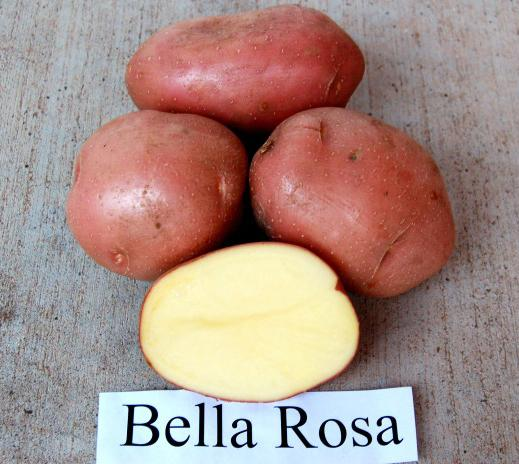беллароза картофель