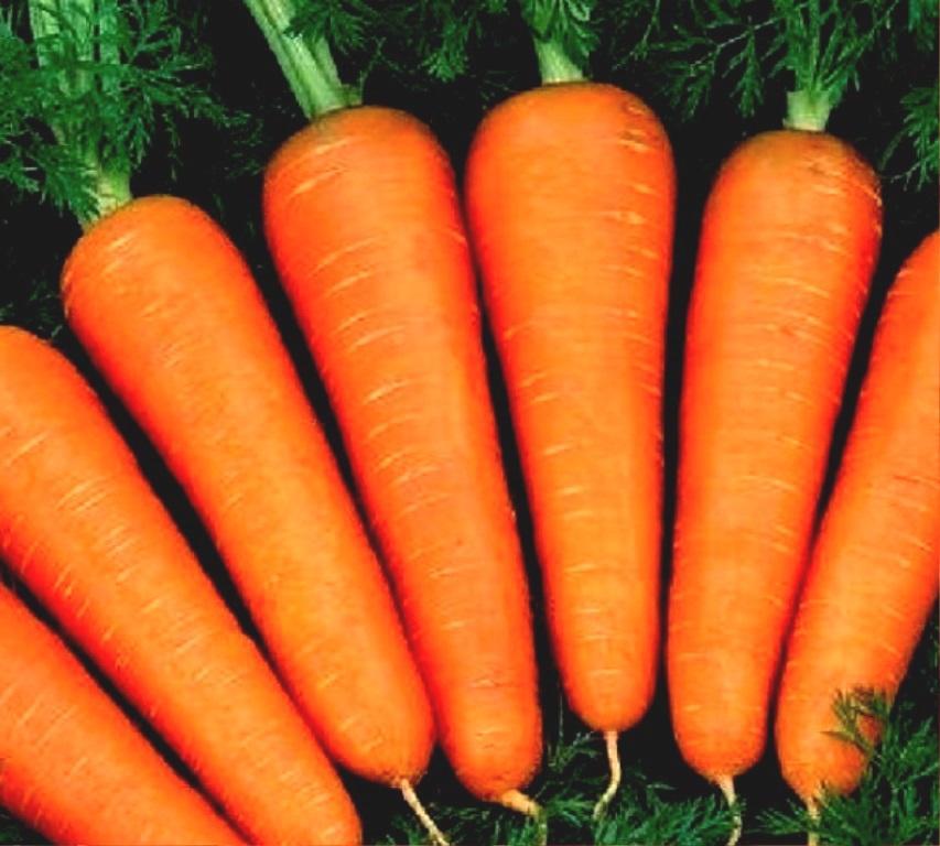 Валерия морковь