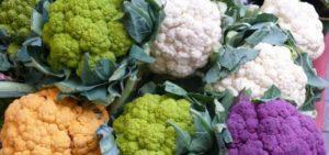 50 лучших сортов и видов цветной капусты с названиями и описанием