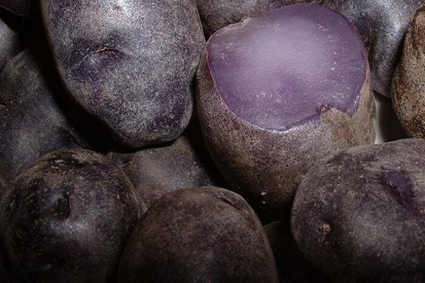 Перуанский фиолетовый