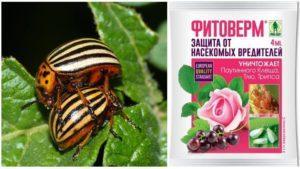 Как развести «Фитоверм» от колорадского жука и инструкция по применению