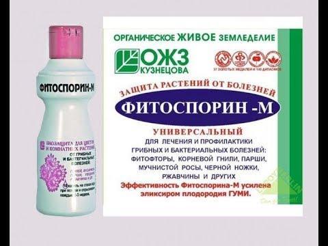 Фитоспорин-М препарат