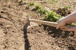 Как быстро своими руками прополоть картошку, приспособления и инструменты
