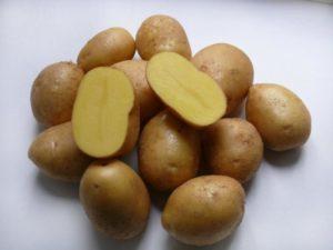 Описание и характеристика картофеля сорта Невский, правила посадки и ухода