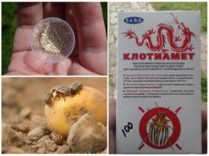 Инструкция по применению средства Клотиамет от колорадского жука