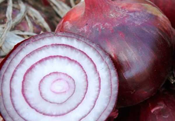 фиолетовый лук Ялтинский