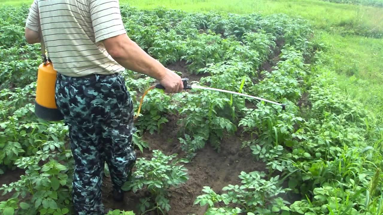 опрыскивание арбуза