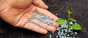 Виды микроудобрений, влияние на развитие растений и лучшие готовые средства