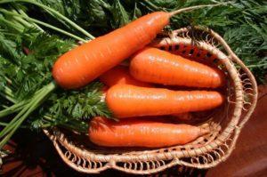 Можно ли в июле или в конце июня посадить морковь, благоприятные дни и правила ухода