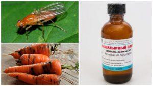 Как бороться с морковной мухой нашатырным спиртом, способы обработки и полива