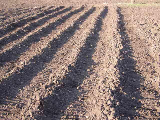 поле для картошки