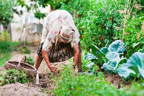 как быстро прополоть морковь