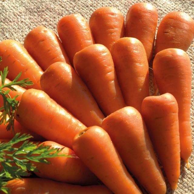 морковь Королевская