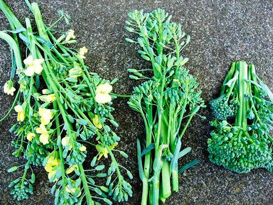 как получить семена капусты