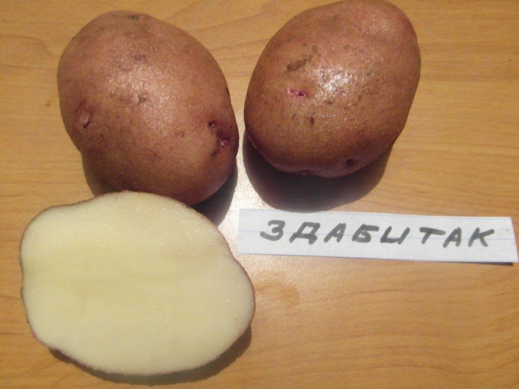 Здабытак картофель
