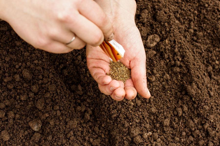 семена в руках