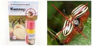 Инструкция по применению средства Танрек от колорадского жука, как разводить