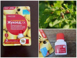 Инструкция по применению «Жукоеда» от колорадского жука, вред для человека