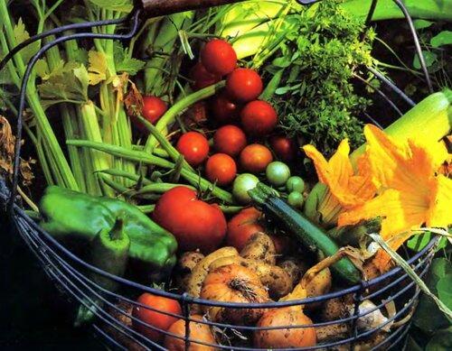 плодородность на огороде