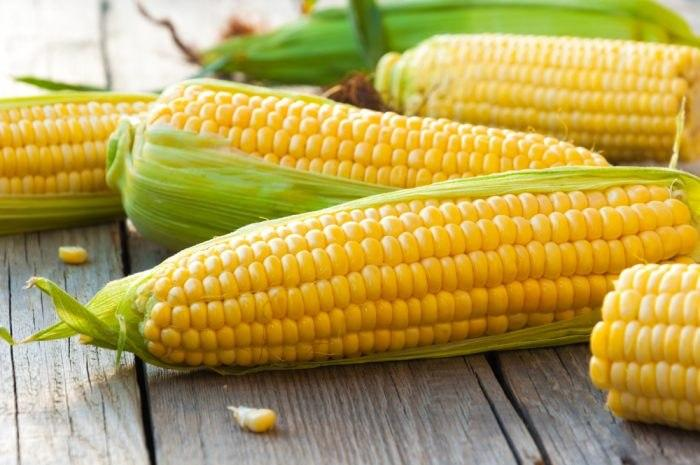 кукуруза бостон