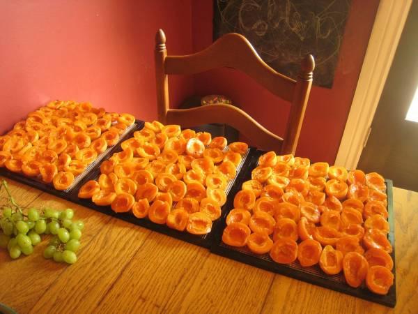 сушка с абрикос