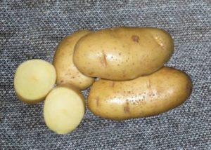 Описание и характеристика сорта картофеля Ласунок, посадка и уход