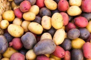 Описание лучших сортов картофеля отечественной и иностранной селекции