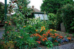 Что можно посадить под яблоней и правила выбора лучших соседей в саду