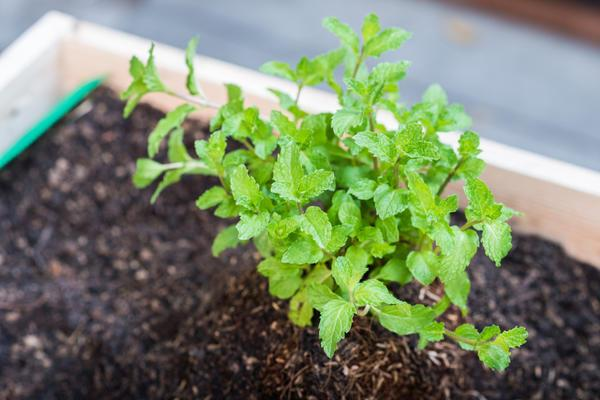 выращивание в грунте