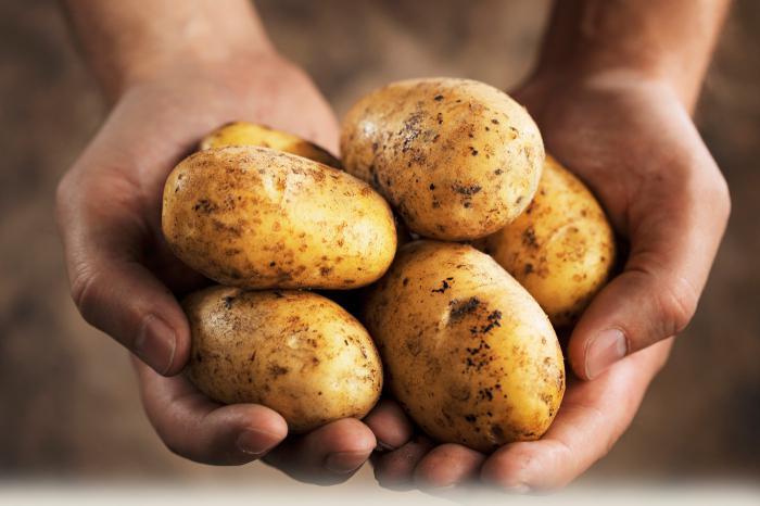 картофель зекура