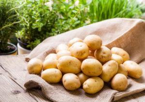 Описание и характеристики сорта картофеля Крепыш, правила посадки и уход