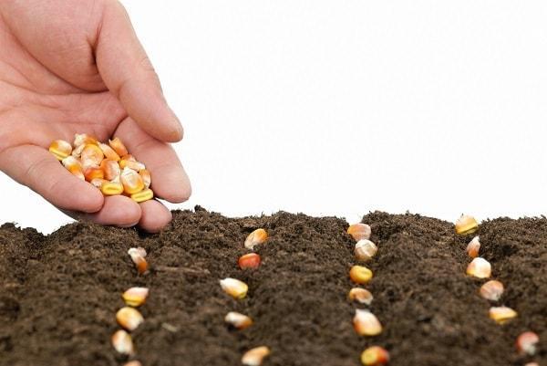 посадка зерна