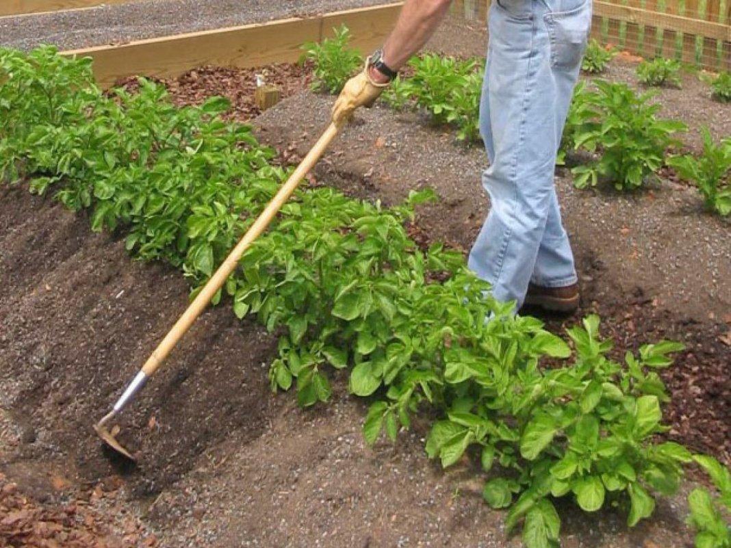 окучивание картошки