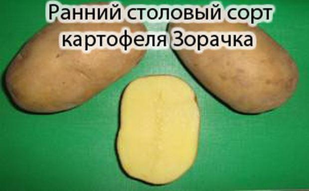 картофель зарочка