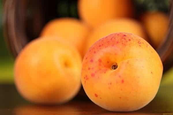абрикосы спелые