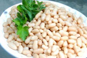 Польза и вред белой фасоли для здоровья, сорта и выращивание