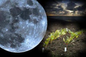 Благоприятные и неблагоприятные дни по лунному календарю огородника на май 2019 года