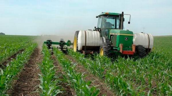 подкормка кукурузы