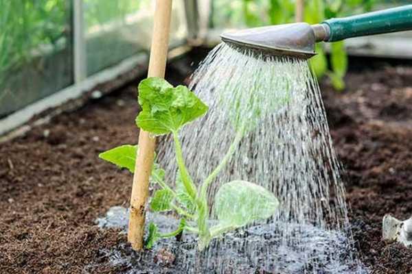 внесение органичного удобрение