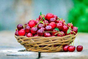 Описание и разновидности вишни сорта Шпанка, посадка и уход