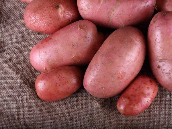 дезире картофель
