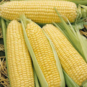 кукуруза Элен