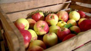 Можно ли и как в домашних условиях сохранить яблоки на зиму, срок годности