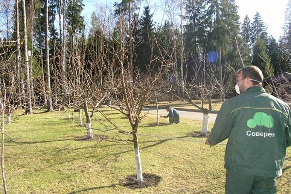 пресадка дерева